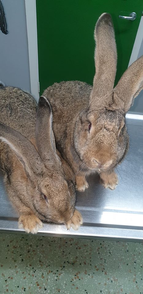 Follow up vaccination to the vet for these 2 ladies today??at Drumahoe Veterinary Clinic.