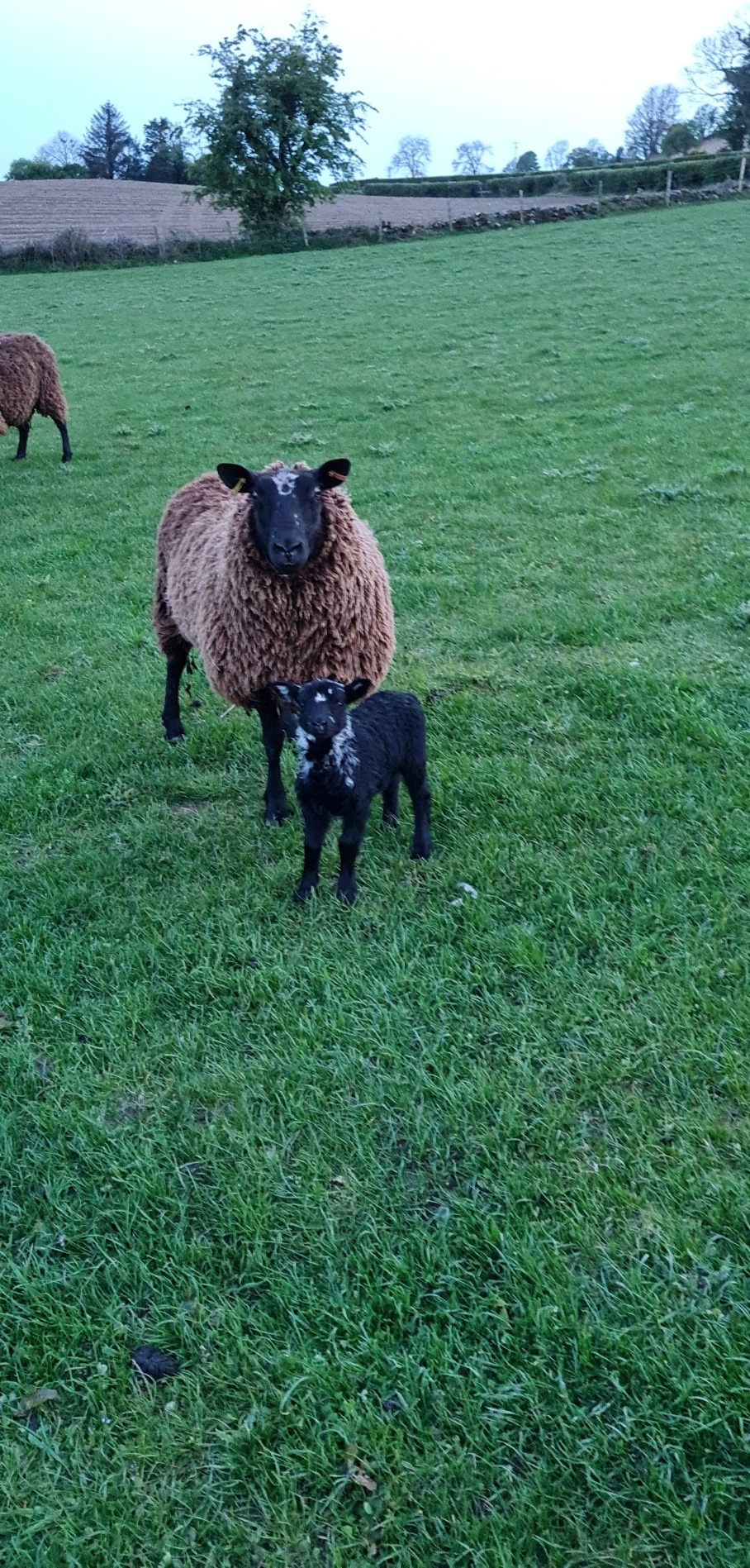 Read more about the article So much new life on the farm over the last number of weeks. 🐑🐑