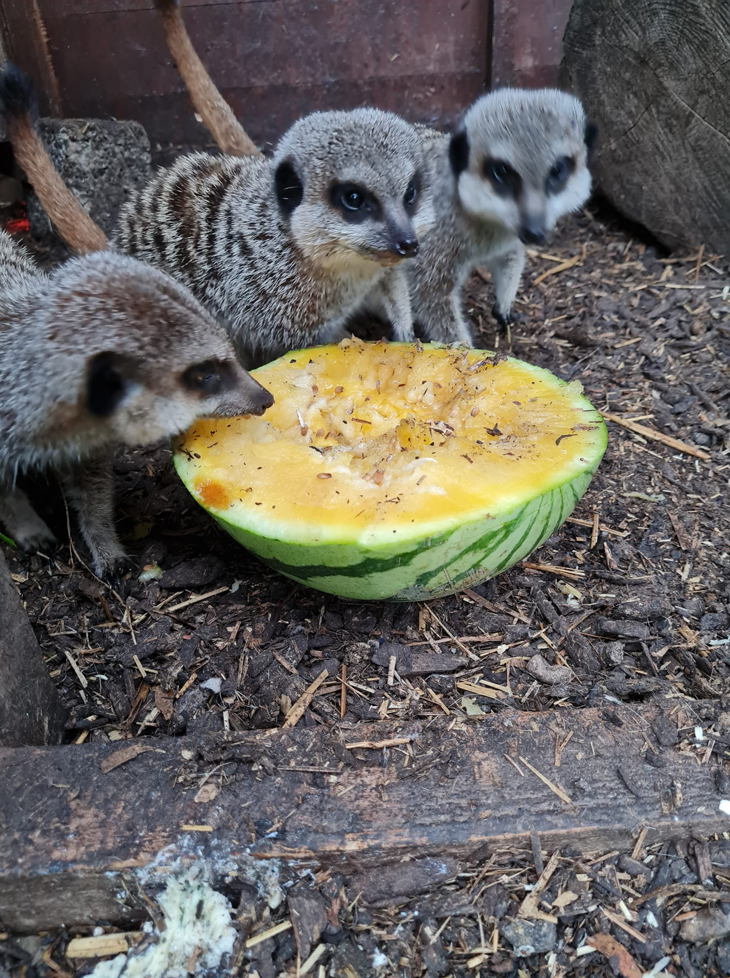 Read more about the article Healthy breakfast for these guys🍉🍉